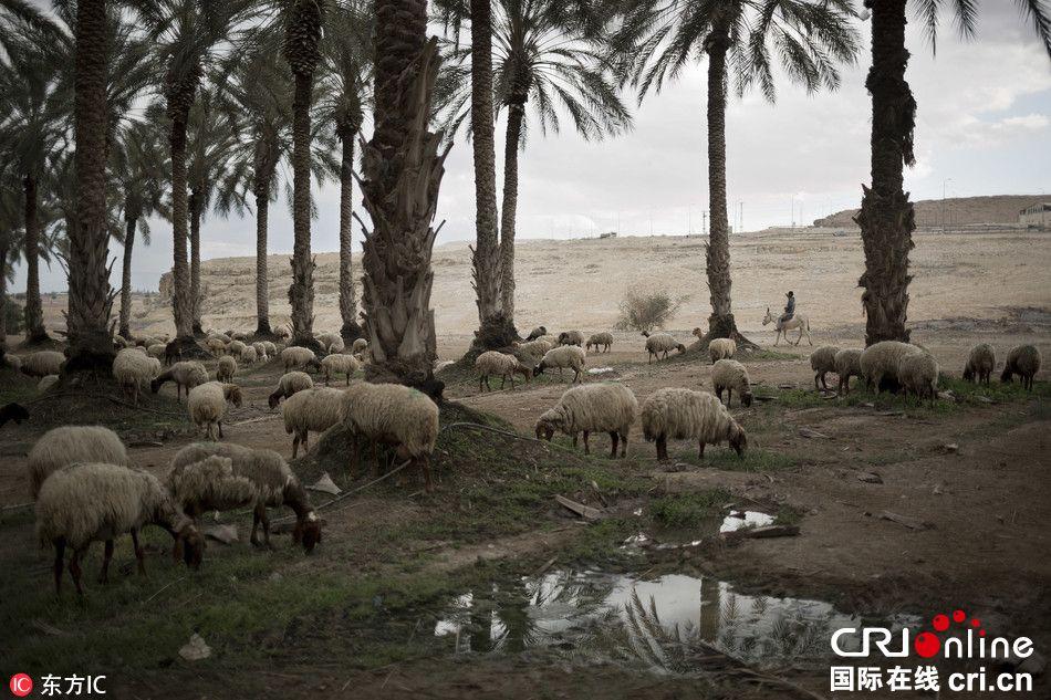 干旱持续五年 以色列三大著名水域干涸